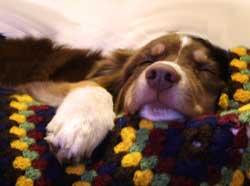 L'absence du maître et la solitude du chien