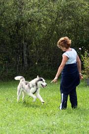 Dressage du chien au rappel