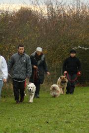 Education et dressage des chiens à Menotey | Aline AUBLÉ