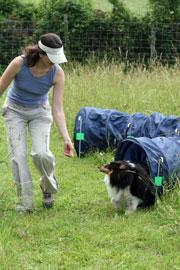 Centre de dressage pour chiens dans le Jura - K9 Games ou