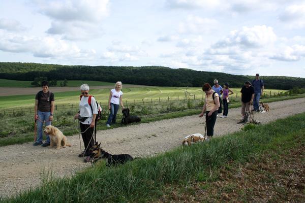 Education canine en cours collectifs