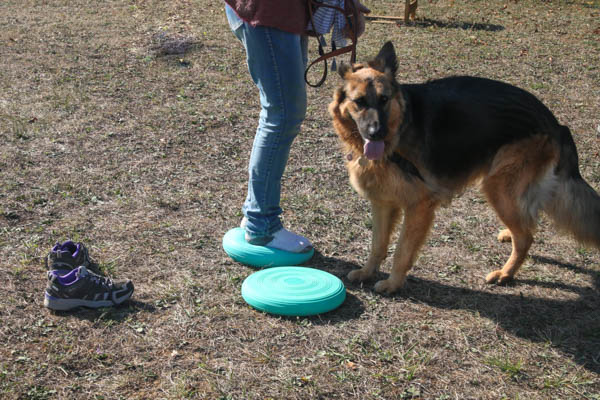 Proprioception et fitness canin