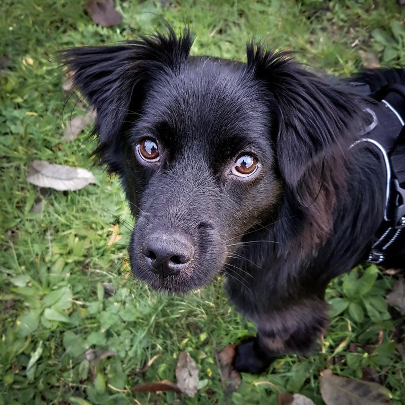 Chien adoption animalliance