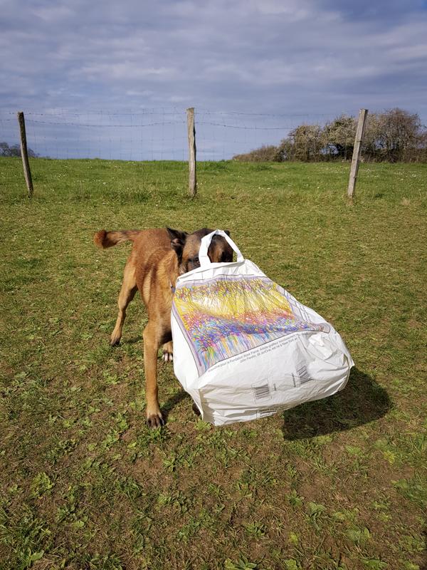 Malinois avec son jouet dans un sac
