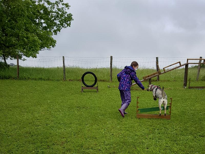 saut d'obstacle en agility