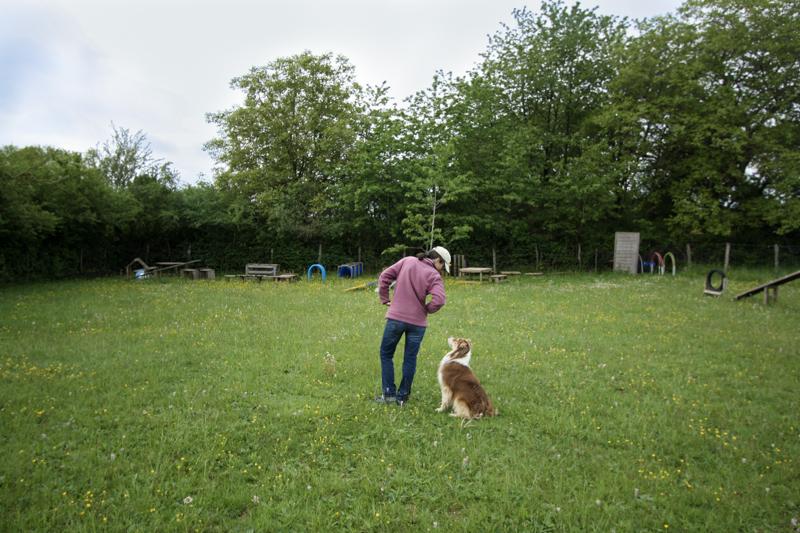 Dressage chien Menotey Centre canin