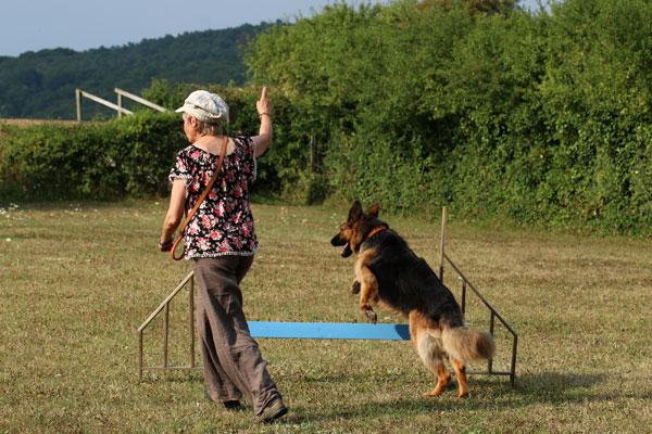 Berger allemand en agility